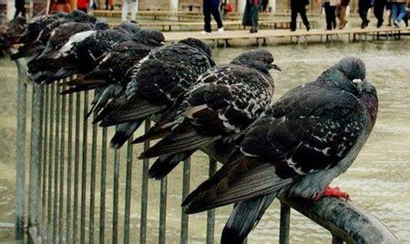 come scacciare i piccioni dal terrazzo come allontanare i piccioni dal balcone come fare tutto