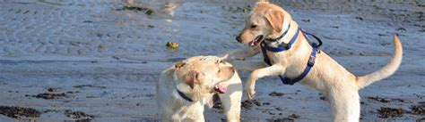 friendly beaches nc pet friendly beaches in bald island nc tripswithpets