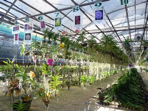 greenhouses in florida orchid not for sale picture of r f orchids