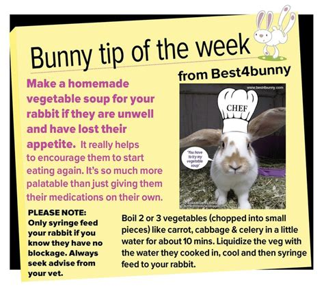 Must For The Week The House Bunny by Bunny Tip Week 19 Make A Vegetable Soup For