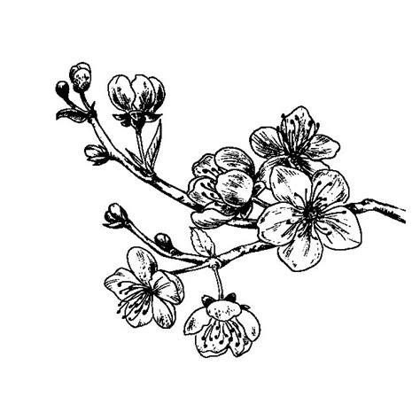 imagenes flores de cerezo flor de cerezo para colorear pintar e imprimir