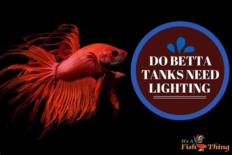 betta fish tank light betta fish care complete and free a to z guide all you
