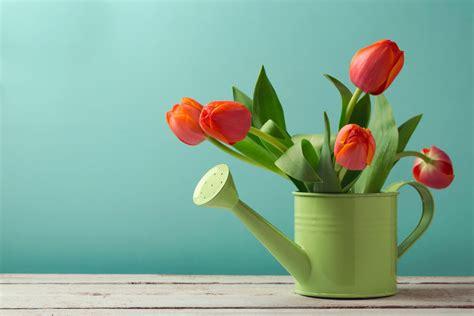 wallpaper flower in pot orange tulips plants flower pot wallpaper flowers