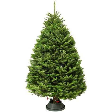 home depot real christmas trees tree farms inc 5 ft to 6 ft freshly cut noble fir real tree live 25