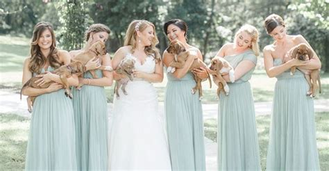 puppy bouquet wedding bridesmaids hold rescue puppies instead of flowers heroviral