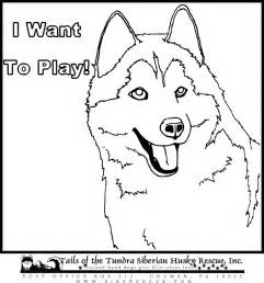 husky coloring pages husky coloring sheets coloring pages husky coloring