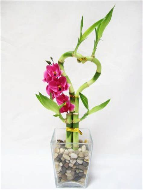 how to arrange indoor plants 9greenbox live heart 4 style lucky bamboo arrange w
