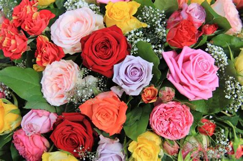 different colors of roses top 10 most popular flowers to plant in your garden