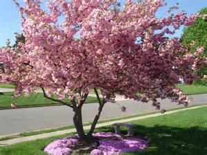 lisa earthgirl gardening tips and helpful advice
