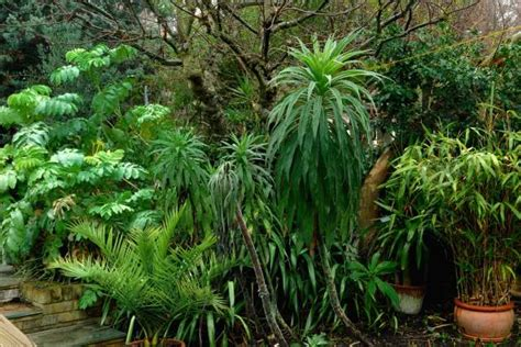 Tropical Garden Plants by Winter Interest In The Cool Tropical Garden