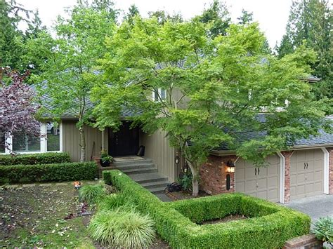 maple tree trimming jd tree service tree pruning tree trimming serving seattle eastside including redmond