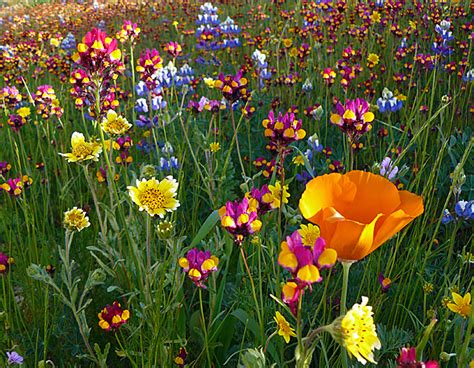 the flowers wild dream houses from movies lawn and garden feature how to grow wildflowers