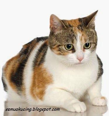 merawat kucing muntah cara mengatasi dan merawat kucing