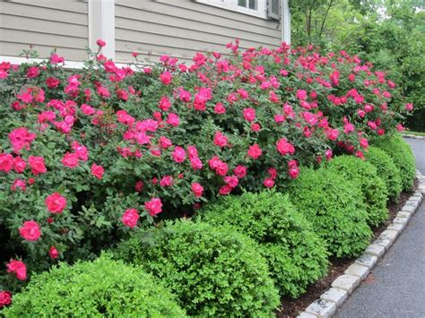 cool front yard landscaping best 20 front yard landscaping ideas on yard
