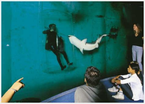 le grand aquarium de malo bretagne