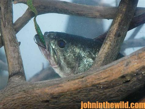 bass pro belly boat what tackle you need to belly boat fish for bass john in
