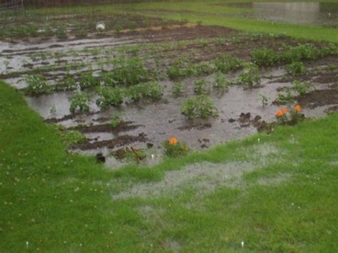 backyard flooding problems how to improve clay soil and poor garden drainage
