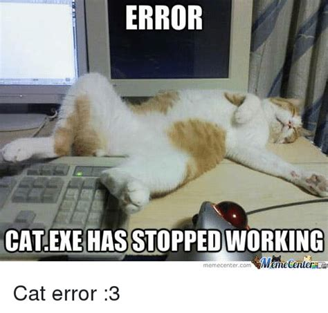 Working Cat Meme - 25 best memes about cat exe has stopped working cat exe