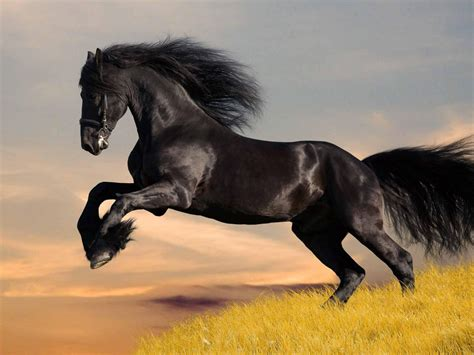 black lightningbeautiful black horse wallpaper hd