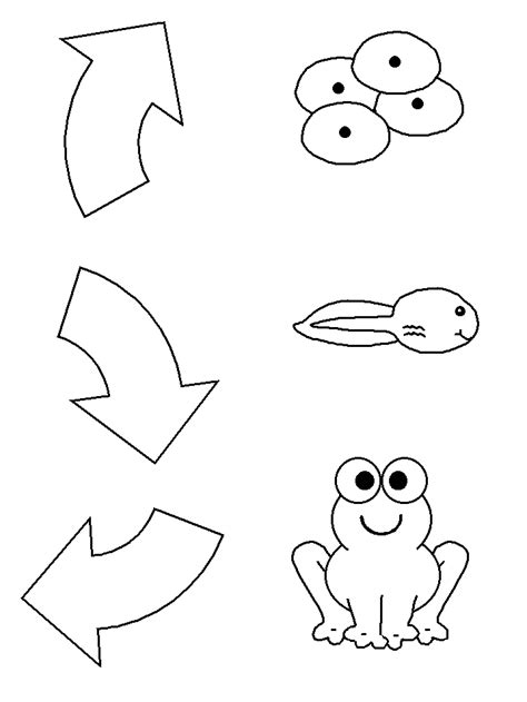 frog life cycle coloring pages az coloring pages