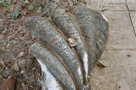 Muschel Tafeln by Fingerhut