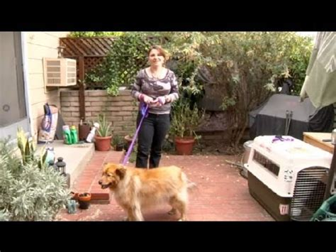 how to keep dogs from peeing in the house how to keep a dog from peeing on your flowers how to