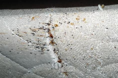 do bed bugs go away bed bugs fast action pest control corporation
