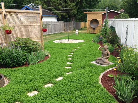 Urban Clover Lawn Urban Seedling Clover Lawn And Landscape