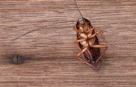 Exterminate Kitchen Bugs Ways To Get Rid Of Insects In Your Home Mnn