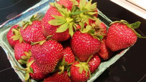 strawberry swings frank s feast a tour through southern connecticut s food
