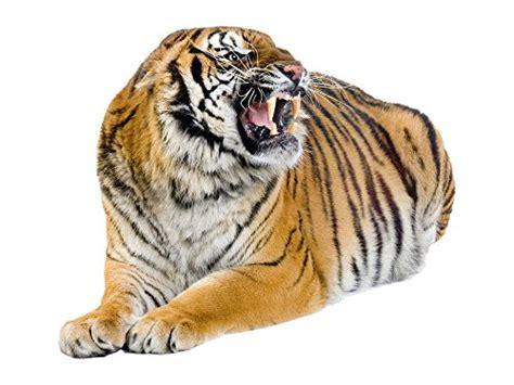 3d Aufkleber Groß by Wandtattoo Tiger Liegend Oder Laufend