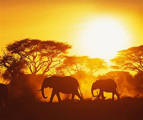 top 5 african safari experiences a luxury travel blog