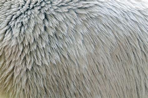 polar fur color polar fur texture up free patternpictures