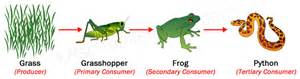 Ford Chaign Food Chains And Food Webs Exles Of Food Chains And