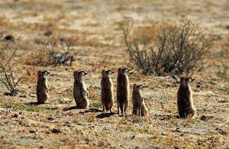 imagenes de animales que viven en el desierto que animales viven en el desierto