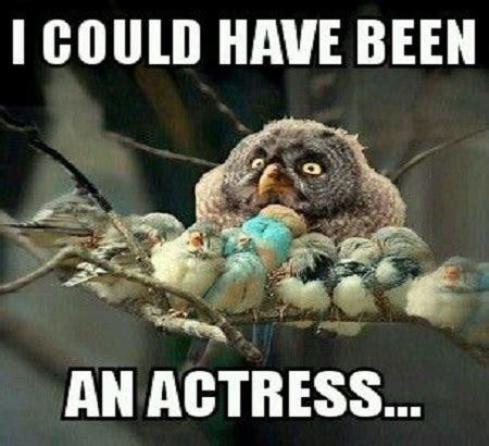 Meme Bird - funny bird memes