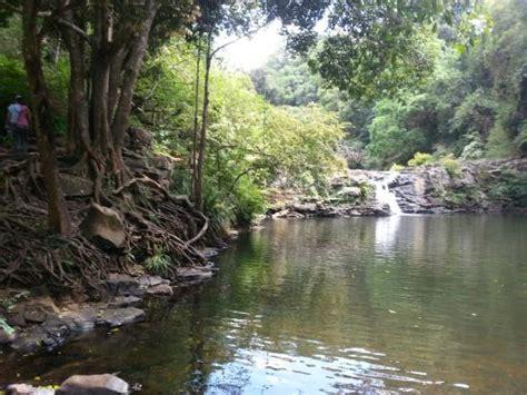 gardners falls maleny sunshinecoasthinterlandtours - Garden Falls Maleny