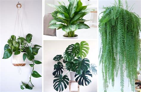 best decorative house plants the best indoor plants for clean air and low light