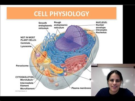 cell physiology unit  video  youtube