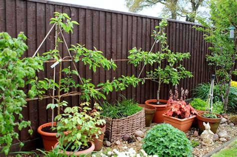 how to grow apple trees in backyard how to grow an apple tree in a container garden culture