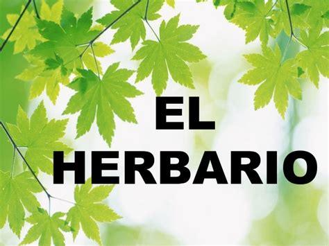 el herbario de las 8426381820 c 243 mo hacer un herbario