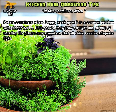 herb garden basics amazing kitchen herb garden tips 20 pics