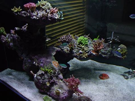 saltwater aquarium aquascape reef tank aquascaping top selection thor s reef reef