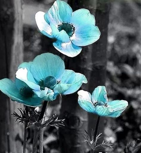 black and white with color black and white with color splash blue www pixshark
