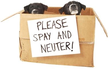 do dogs get spayed or neutered 7 myths about spaying and neutering pet attack
