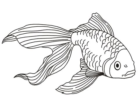 fish to color free printable goldfish coloring pages for