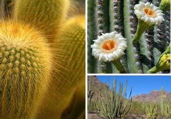 tropical desert animals and plants desert wonderful west wilderness
