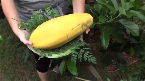 Papaya Fruit N Moringa Leaves Youtube