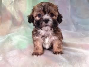 Puppy bear dog teddy bear puppies for