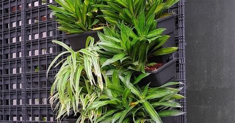 modular greenwall vertical garden system now available